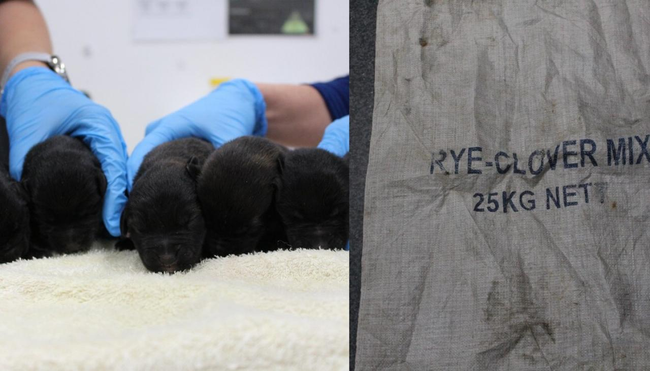 One-day-old puppies dumped on Canterbury river bank in a sack