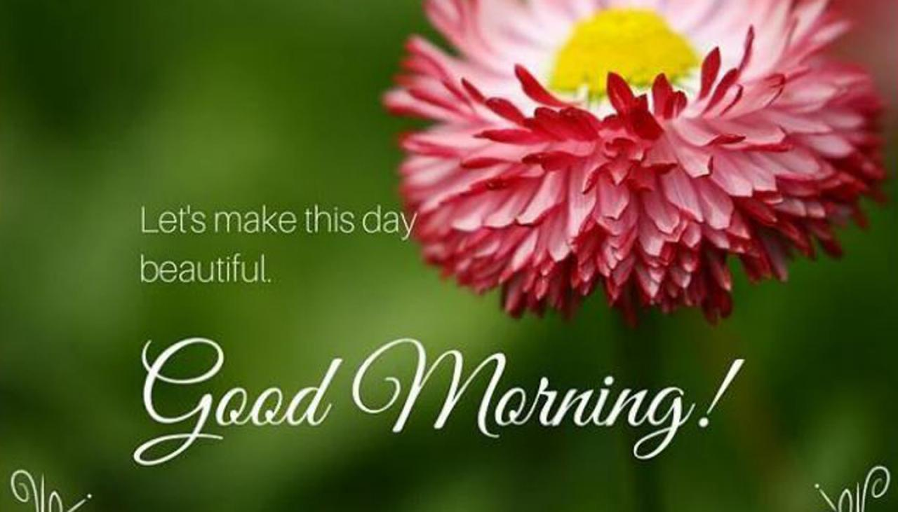 Whatsapp flooded with good morning greetings in india newshub m4hsunfo